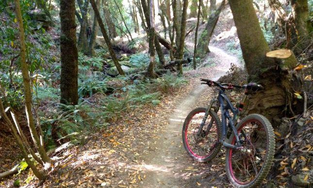 Peters Creek Trail
