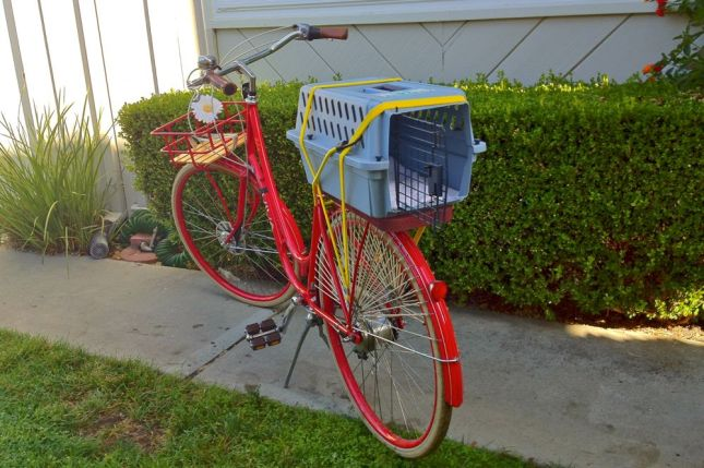 All it takes are a few bungee cords and you can attach almost anything to a bike.