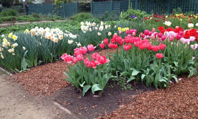 Tulips and daffodils, the first flowers of Spring.