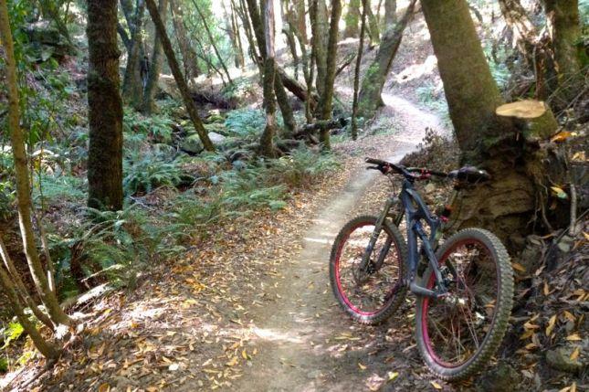 Long Ride - Peters Creek Trail