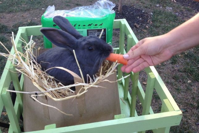 Flinch will gladly pose for the camera to munch on some tasty carrots.