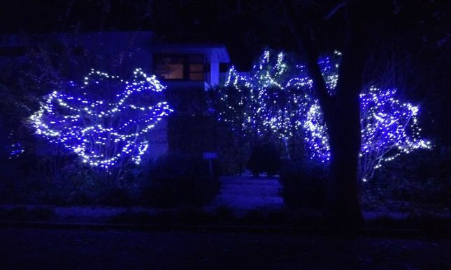 Holiday lights aren't just for traditionalists. This modern house looks elegant but inviting in blue.
